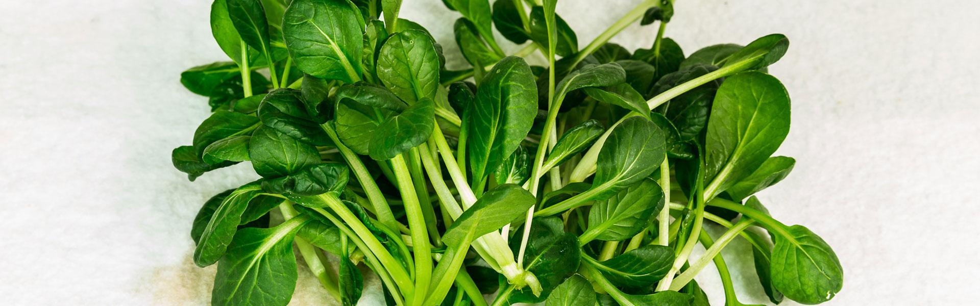 Ca-Vittoria-erbe-aromatiche-orto